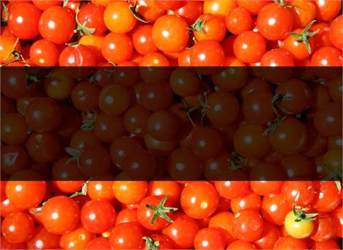 Tomato vs. Book vs. Fiction vs. Farce