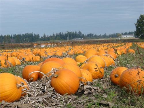 Pumpkins Sweet & Savory